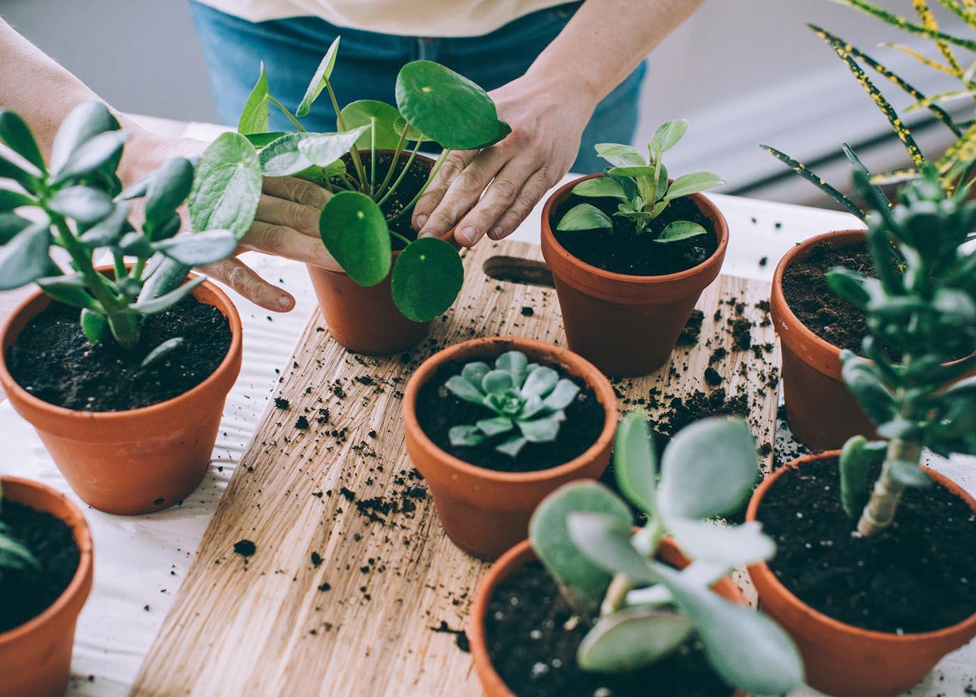 como cuidar de plantas