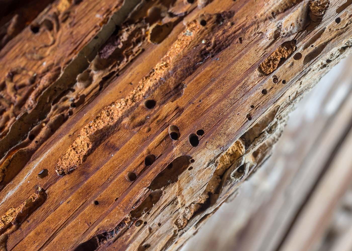 madeira estragada
