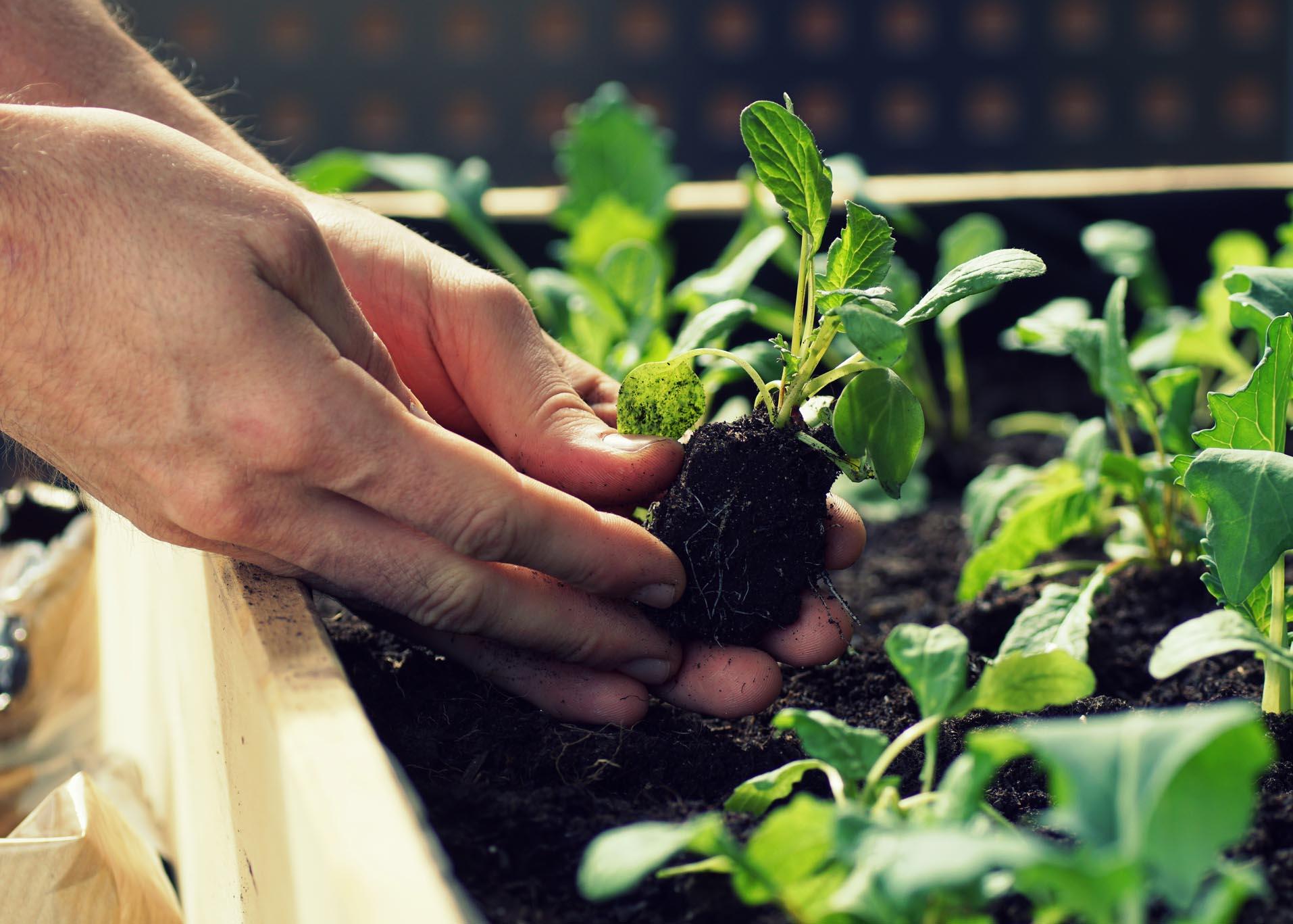 mudar plantas