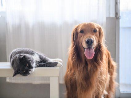 Cães e gatos no verão