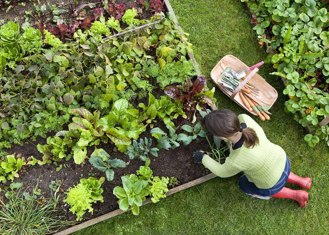 cuidar da horta em casa
