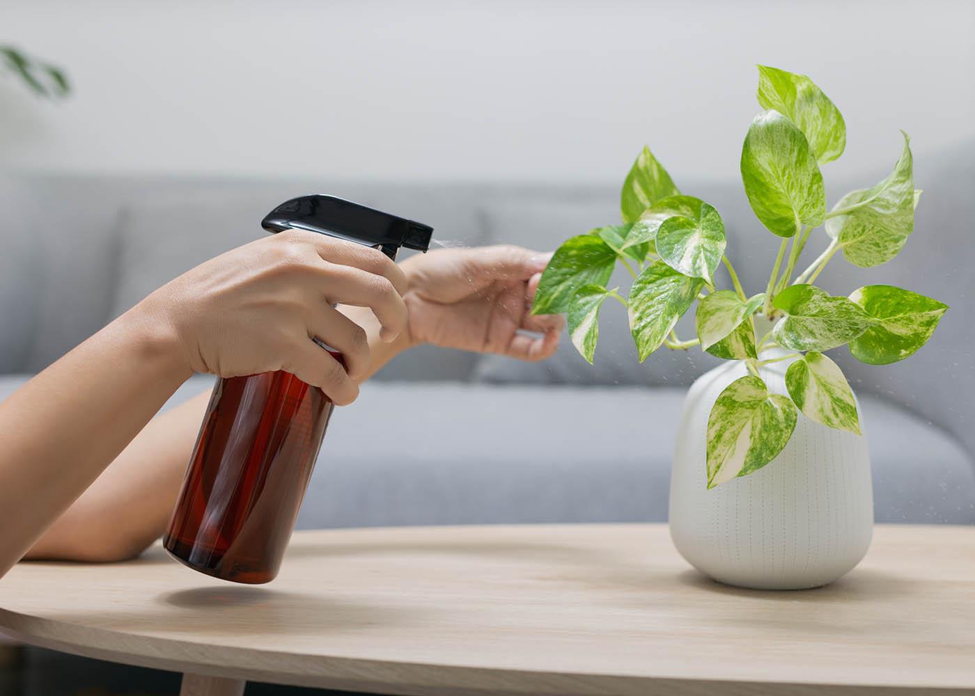 ter plantas em casa
